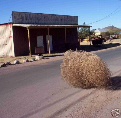 Click image for larger version  Name:tumbleweed1.jpg Views:6 Size:29.2 KB ID:43914