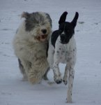 Dog & Flynn Playing In The Snow.jpg